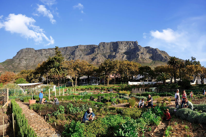 Oranjezicht City Farm & Market · Cape Town City Guide